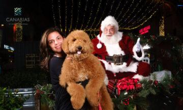 Pics with Santa & Puppies on Main Street
